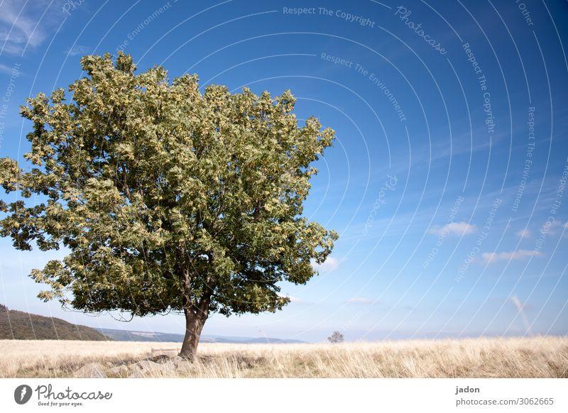 der baum im herbst. Natur Landschaft Pflanze Himmel Horizont Herbst Schönes Wetter Baum Gras Feld Menschenleer alt ästhetisch Kraft schön Fernweh ruhig Umwelt
