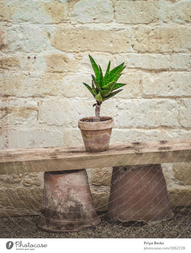 Kaktus Umwelt Natur Pflanze Erde Topfpflanze Wüste Stein Holz Backstein ästhetisch dreckig grün Blumentopf Farbfoto Innenaufnahme Textfreiraum oben Tag Licht