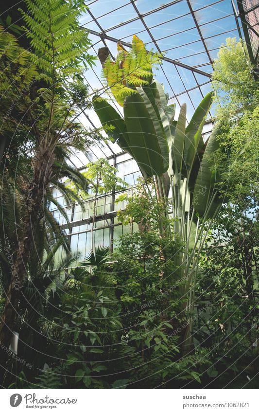 gewächshaus Natur Pflanze grün Baum Blatt Garten Wellness Wissenschaften exotisch Urwald Palme Botanik Gewächshaus Kostbarkeit selten Gärtnerei
