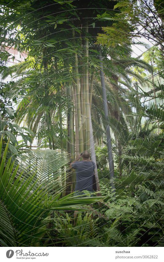 dschungel Urwald Botanik Botanischer Garten Gartenbau Gewächshaus Pflanze Baum Palme Blatt Palmengarten Innenaufnahme Baumstamm groß exotisch Mann Fotografieren