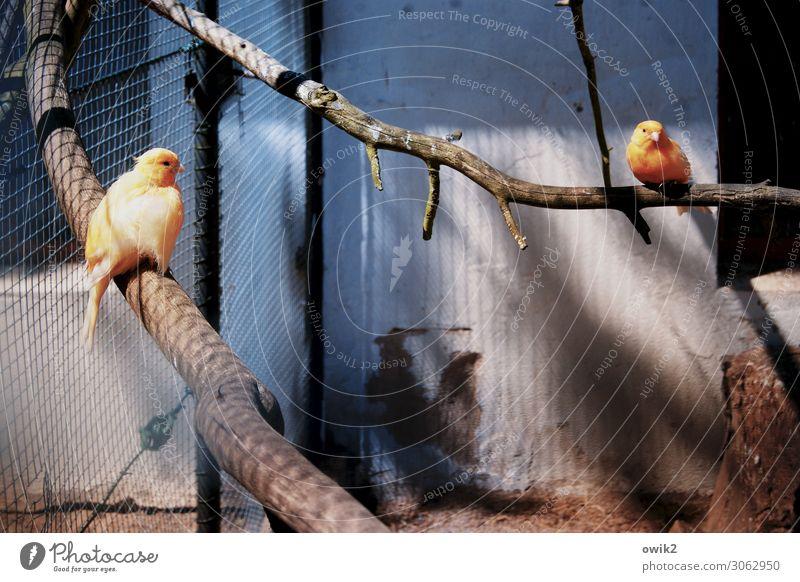 Vogelperspektive Tier Traurigkeit Tierpaar sitzen beobachten Ast Trauer Sehnsucht Fernweh Stress exotisch Langeweile Zoo Sorge gefangen