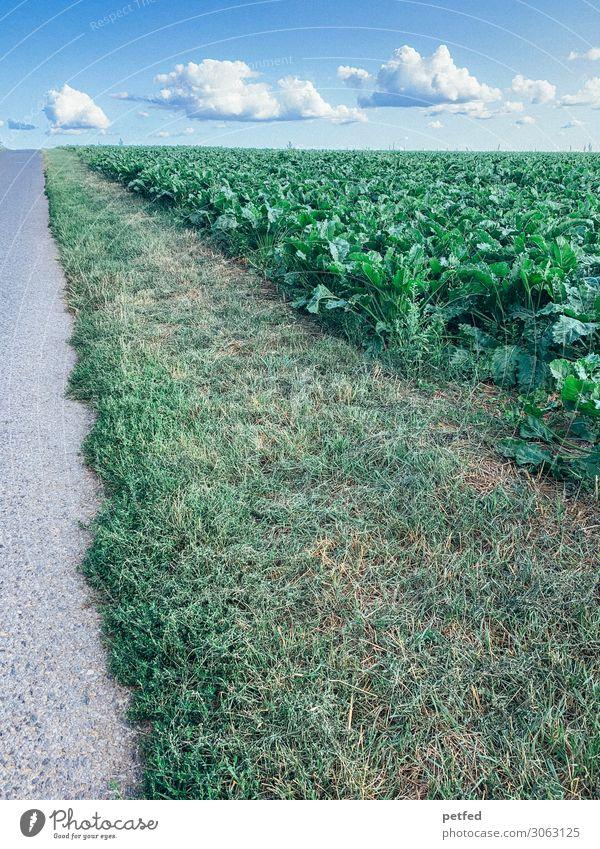 Streifen zum Horizont Natur Landschaft Himmel Wolken Sommer Gras Nutzpflanze Feld Straße Beton Unendlichkeit lang blau grau grün Genauigkeit Präzision