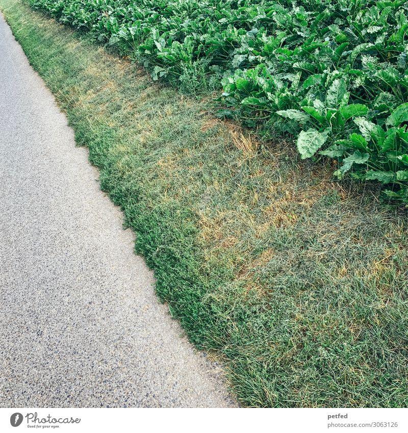 Streifen der Natur Erde Sommer Pflanze Gras Nutzpflanze Straße Wege & Pfade lang natürlich grau grün Design Inspiration Kunst Farbfoto Außenaufnahme