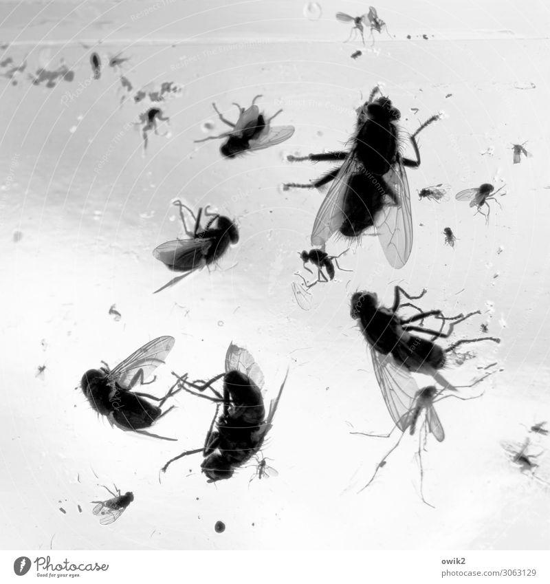 Friedhof der Kuscheltiere Fenster Fliege Fliegenfalle Schädlingsbekämpfung Glas dehydrieren Ekel viele bizarr Tod Verfall Vergänglichkeit verlieren kleben