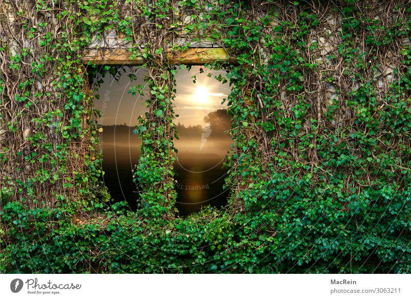 Efeufenster Natur Landschaft Pflanze Sonnenaufgang Sonnenuntergang Sonnenlicht Sommer Schönes Wetter Feld Stadtrand Menschenleer Ruine Mauer Wand grün Abenteuer