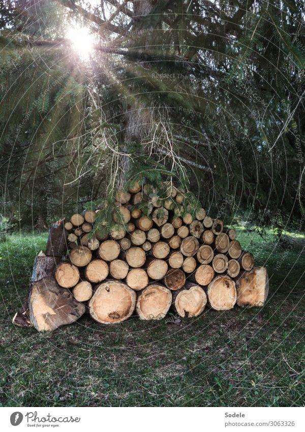 Kaminholzvorrat Natur Sonne Baum Wald Holz natürlich Energiewirtschaft authentisch Landwirtschaft nachhaltig Stapel Forstwirtschaft Nutzpflanze Waldboden Vorrat