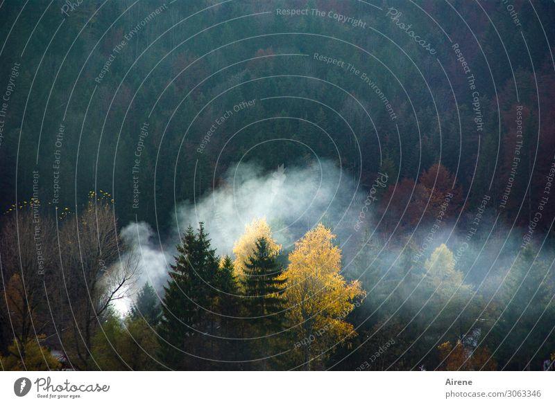 nebulös | Feuerzeichen Herbst Wald Alpen Bergwald Mischwald Waldbrand Rauchwolke Rauchzeichen dunkel heiß gelb grün weiß gefährlich bedrohlich Klima Umwelt