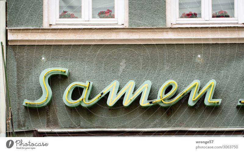 Samenbank Mauer Wand Fassade Stein Glas Schriftzeichen alt Stadt kaufen Wandel & Veränderung Leuchtreklame Handel Neonlicht Farbfoto Gedeckte Farben