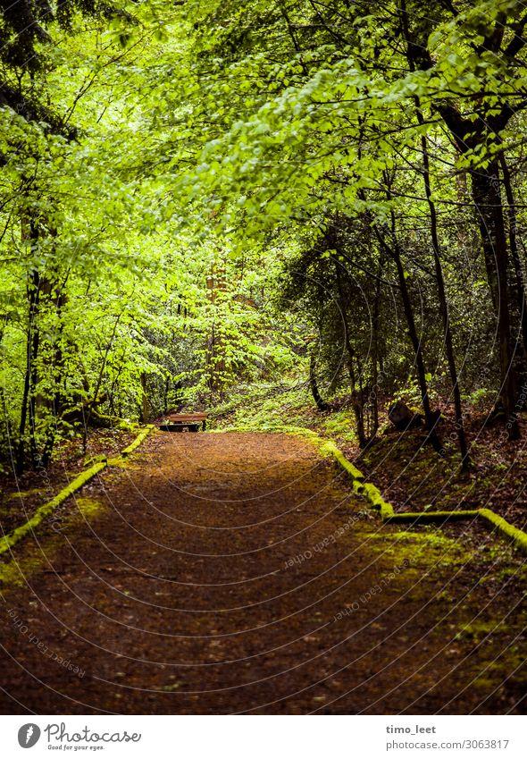 The Green Mile Umwelt Natur Landschaft Pflanze Erde Frühling Sommer Herbst Baum Sträucher Moos Grünpflanze Park Wald Gelassenheit ruhig Frieden Fußweg Waldboden