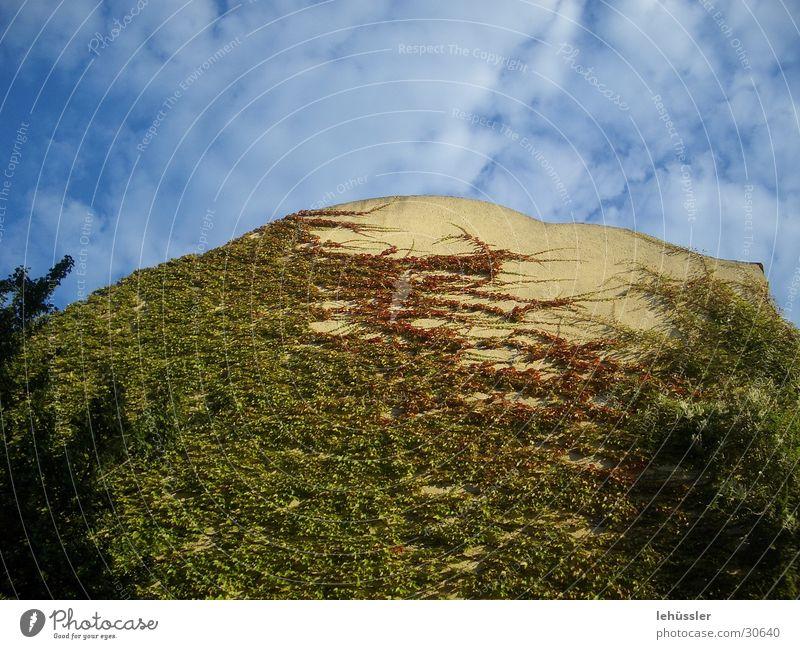 ranken in den himmel Himmel blau grün rot Haus gelb Wein Ranke Brandmauer
