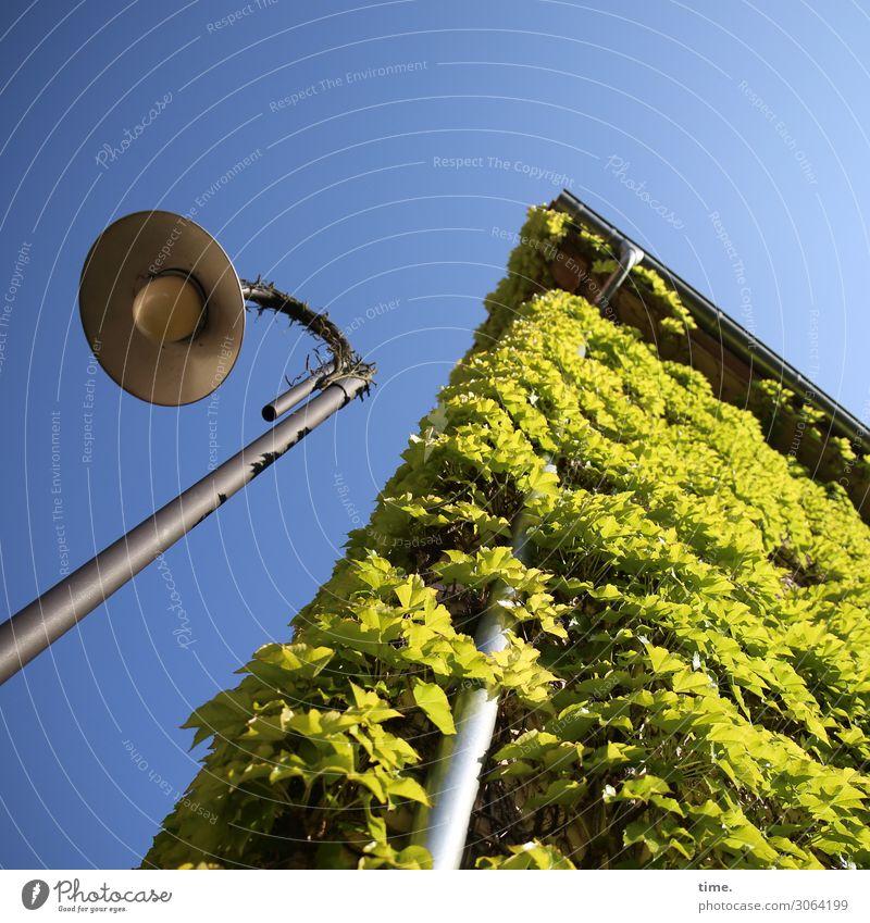Scham & Stolz | AST 9 Himmel Schönes Wetter Efeu Haus Mauer Wand Dach Dachrinne Fallrohr Straßenbeleuchtung hoch blau grün Stimmung Kraft Leben Neugier Reue
