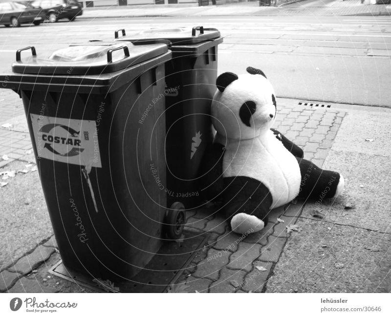 panda macht pause weiß schwarz Straße PKW sitzen Pause Müll obskur Pflastersteine Bär Grauwert Panda