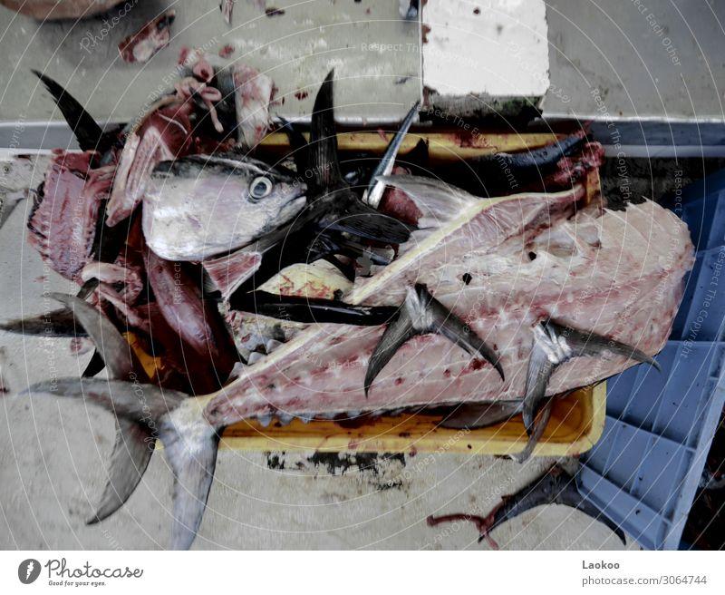Frischer Fisch - zerstückelt und zerhackt Lebensmittel Meeresfrüchte Ernährung Vegetarische Ernährung Angeln Umwelt Natur Küste Wildtier Totes Tier 2 3 4 Kasten
