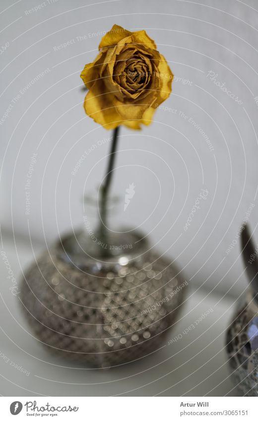 Ich welke Pflanze Sommer Blume Rose Blüte Wildpflanze Gefühle dankbar Trauer Tod Umwelt Vergänglichkeit welken gelbe rose Farbfoto Innenaufnahme