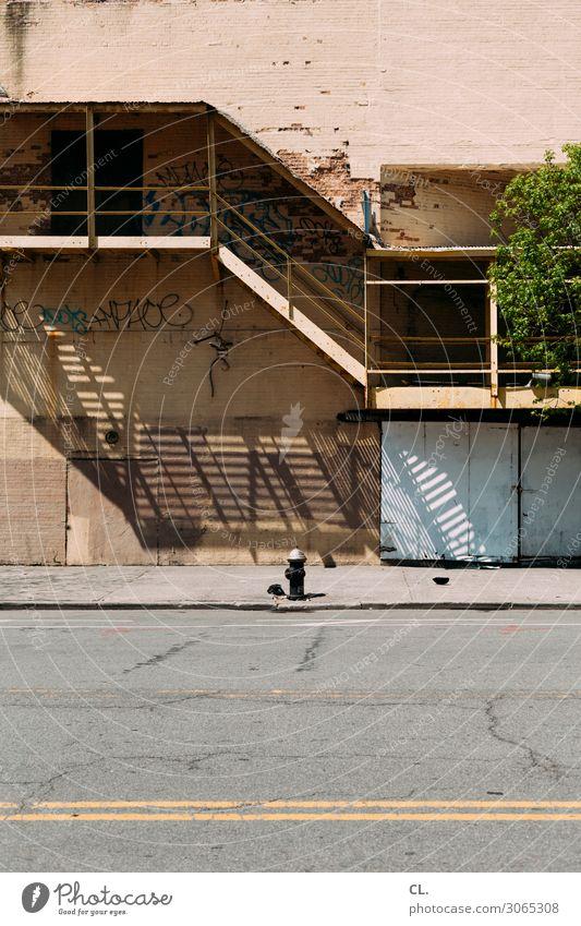 hydrant Schönes Wetter Baum New York City USA Stadt Menschenleer Haus Gebäude Architektur Mauer Wand Treppe Verkehrswege Straße Wege & Pfade Hydrant Graffiti