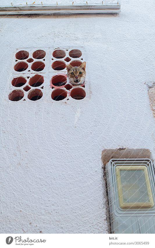 Verloren l in der Röhre Katze Tier Wand Mauer außergewöhnlich Fassade Angst fantastisch gefährlich Neugier Schutz Sicherheit festhalten Todesangst Haustier