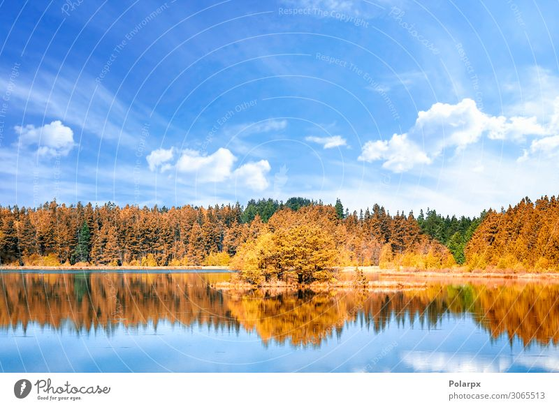 Herbstliche Seenlandschaft mit bunten Bäumen Ferien & Urlaub & Reisen Umwelt Natur Landschaft Himmel Baum Blatt Park Wald Küste Teich Fluss frisch hell