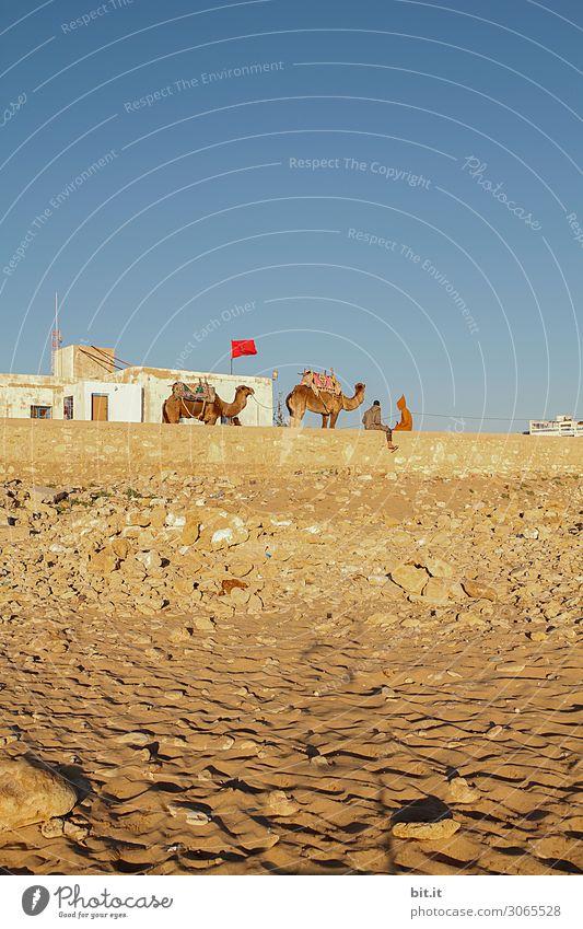 Kamele und Beduinen am Strand von Sidi Kaouki, Marokko. Reiten Ferien & Urlaub & Reisen Tourismus Ausflug Abenteuer Ferne Freiheit Expedition Sommer Sonne