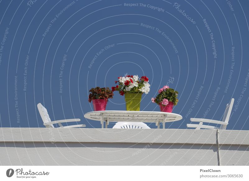 Floristik Lifestyle Leben harmonisch Wohlgefühl Zufriedenheit Ferien & Urlaub & Reisen Tourismus Ausflug Sommerurlaub Kunst Landschaft Pflanze Blume Blüte