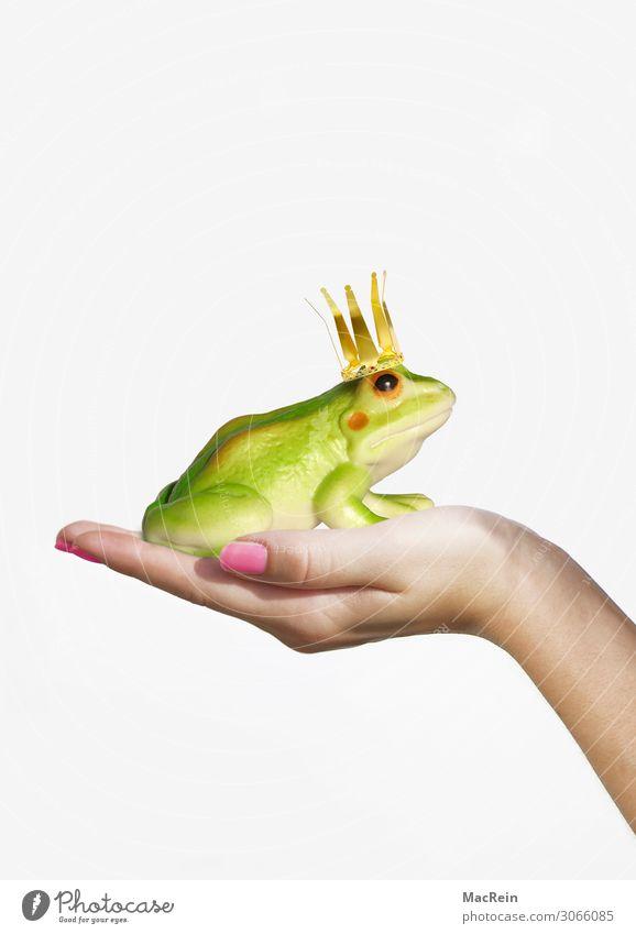 Fröschkönig auf der Hand Glück Mädchen Frau Erwachsene 1 Mensch 18-30 Jahre Jugendliche Frosch Tier Küssen Liebe grün Gefühle Wunsch Froschkönig Prinzessin