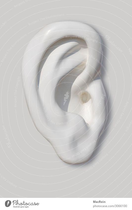 Ohr Medikament Sinnesorgane hören Gefühle Wachsamkeit Anatomie Biologie Ohrmuschel Hörbehinderung Organ Farbfoto Außenaufnahme Menschenleer Tag