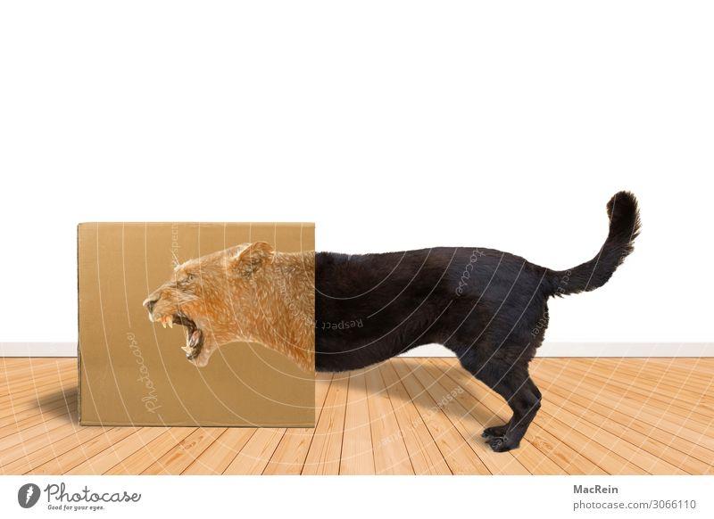 Kampfhund Tier Haustier Hund Tiergesicht Pfote 1 kämpfen Aggression bedrohlich Angst Todesangst gefährlich Aufdruck Holzfußboden Karton Maul Angelrute Tierfigur