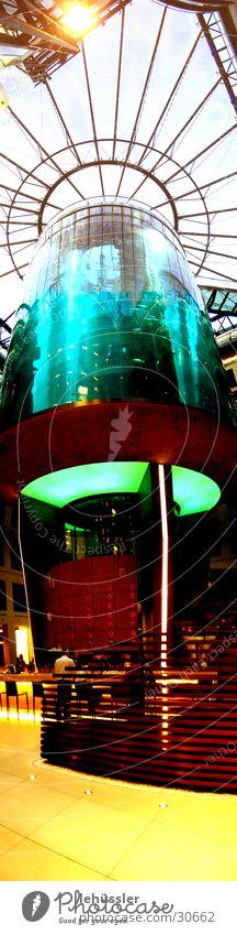 aquarium stehend Wasser Berlin Glas groß Foyer Aquarium Fahrstuhl vertikal