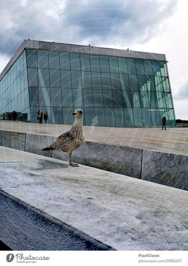 Oslo Ferien & Urlaub & Reisen blau schön Tier Architektur Lifestyle Wand Gebäude Kunst Tourismus Mauer Vogel Fassade Stimmung Häusliches Leben Treppe
