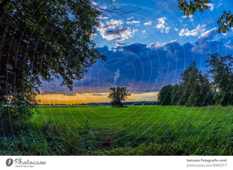 Sonnenuntergang Feld Natur Mecklenburg Landschaft Pflanze Himmel Wolken Horizont Sonnenaufgang Sommer Baum Gras Wiese Wald blau gelb grün orange weiß