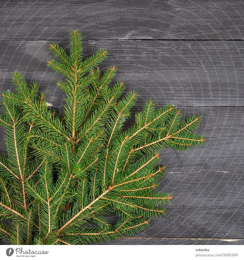grüne Nadeläste auf schwarzem Hintergrund Design Winter Dekoration & Verzierung Tisch Feste & Feiern Weihnachten & Advent Silvester u. Neujahr Natur Pflanze