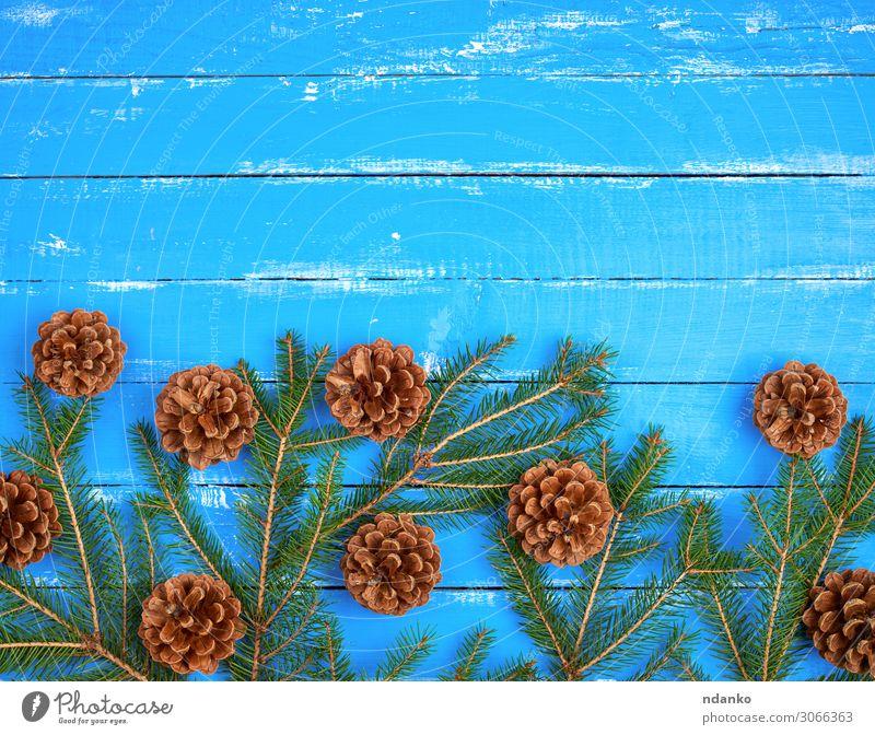 Grüne Fichtenzweige mit braunen Zapfen Design Winter Dekoration & Verzierung Feste & Feiern Weihnachten & Advent Silvester u. Neujahr Natur Pflanze Baum Holz