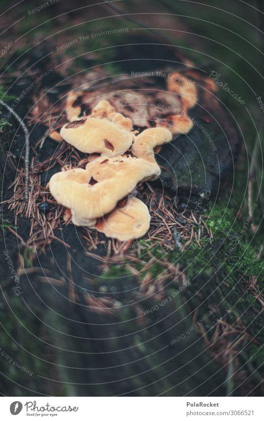 #A# Pilze untenrum Kunst ästhetisch Natur Naturschutzgebiet Naturliebe Naturgewalt Naturerlebnis Naturwunder Naturwissenschaft Naturwuchs Naturkatastrophe