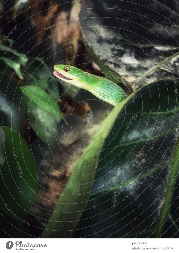 spaß im paradies Pflanze Blatt Tier 1 beobachten Bewegung Fressen Jagd lachen Häusliches Leben Terrarium Schlange grün Grünpflanze trinken Paradies Bibel Kopf