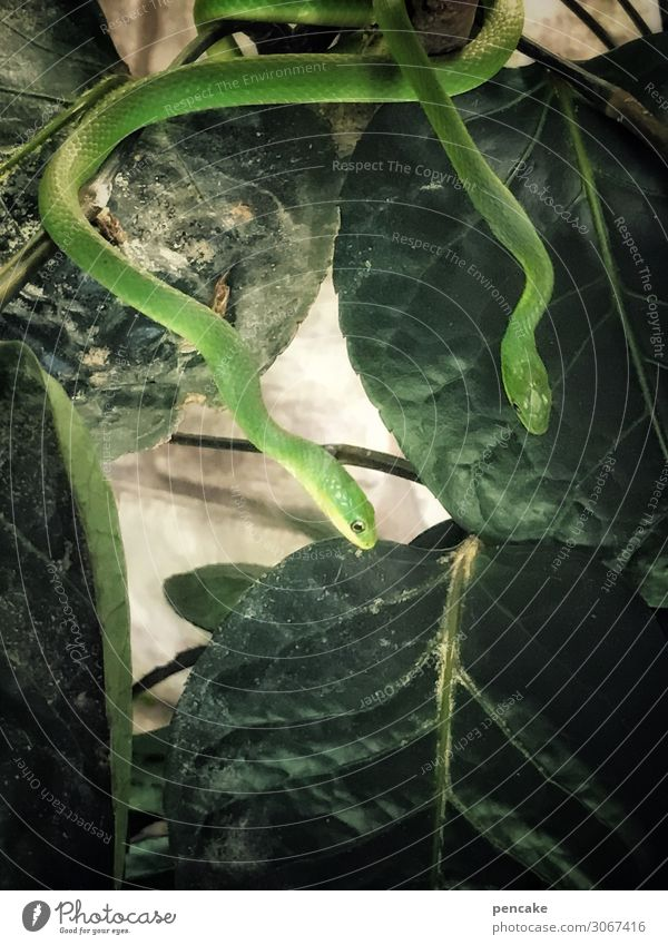 !trash! 2019 | durchschlängeln exotisch Abenteuer Pflanze Blatt Urwald Wildtier Schlange Tier dünn kalt Natur Neugier Terrarium grün Freizeit & Hobby Reptil