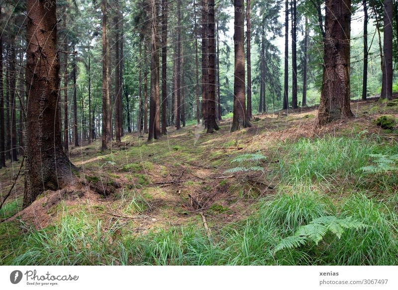 im Wald Umwelt Natur Landschaft Tier Frühling Sommer Klimawandel Baum Gras Farn Urwald Bergisches Land natürlich braun grün Berghang Waldspaziergang Farbfoto