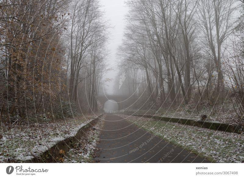 nebulös | ehemalige Bahntrasse Fahrradfahren Herbst Winter Nebel Eis Frost Schnee Baum Wermelskirchen Bergisches Land Tente Balkantrasse Menschenleer Brücke