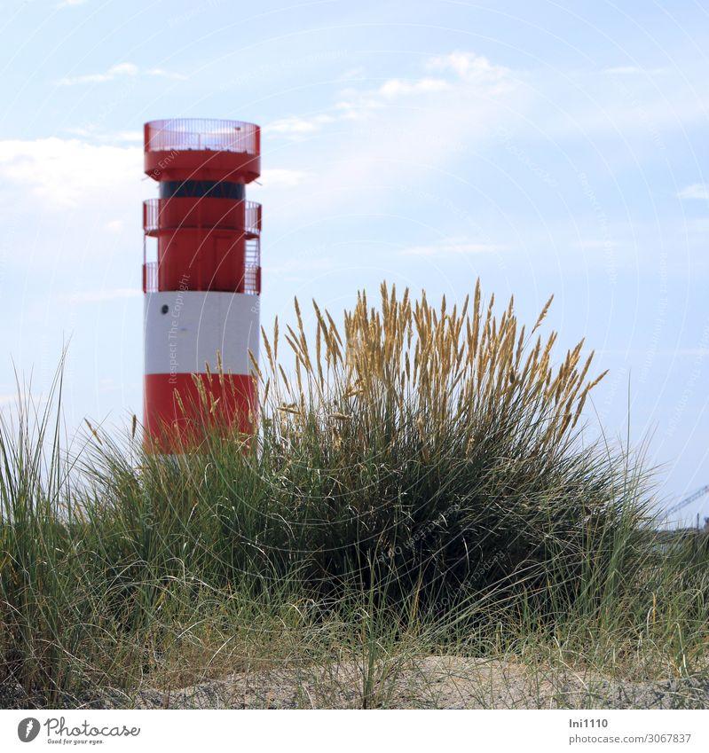 Leuchtturm auf der Düne Landschaft Sommer Pflanze Gras Blatt Blüte Wildpflanze Strandhafer Küste Nordsee Insel blau gelb grün rot weiß Strandspaziergang