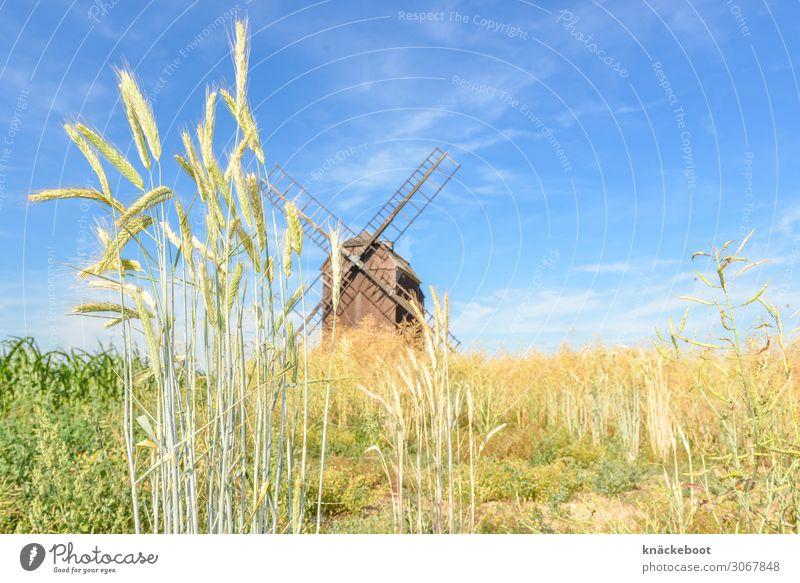 korn Lebensmittel Getreide Landwirtschaft Forstwirtschaft Umwelt Natur Landschaft Sommer Nutzpflanze Farbfoto Außenaufnahme Tag Zentralperspektive