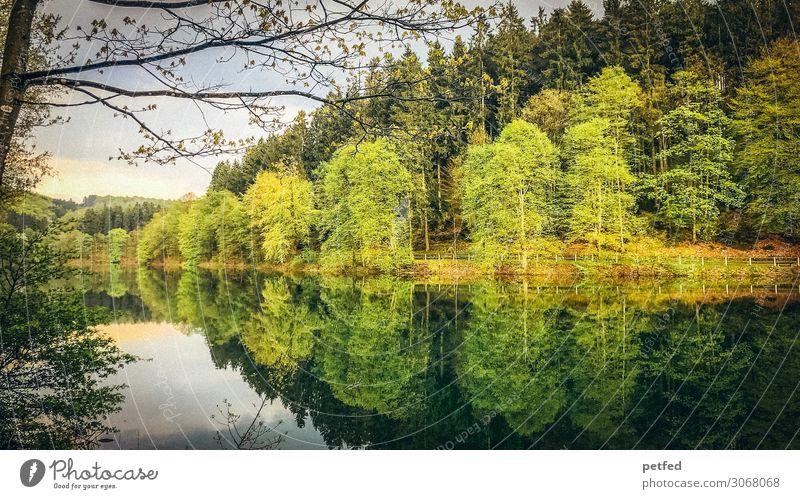Talsperrenidyll IV Natur Wasser Frühling Baum Wald Stausee nass braun gelb grün orange Einsamkeit Erholung Freizeit & Hobby Idylle Farbfoto Außenaufnahme