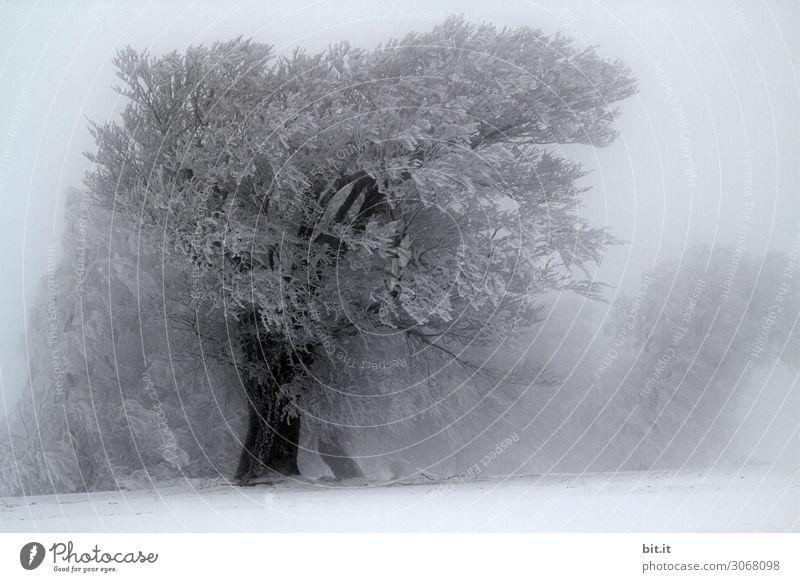Nebulös l Usertreff Wieden l Bäume loben Natur Pflanze Winter Klima Wetter Wind Sturm Nebel Eis Frost Schnee Schneefall Baum kalt Schwarzweißfoto Außenaufnahme