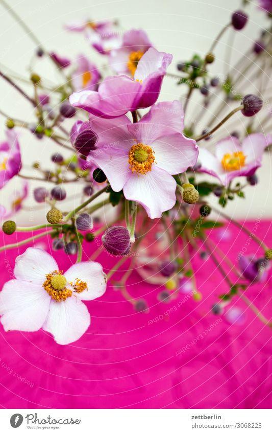 Herbstanemonen Blume Blühend Blüte Garten Menschenleer Textfreiraum Anemonen Buschwindröschen Garten-Anemone Hahnenfußgewächse Ranunkel Blumenstrauß Vase