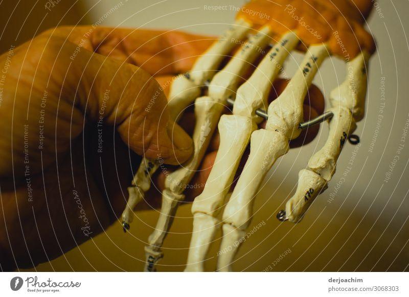 Guten Tag // Eine Menschliche Hand greift nach einer Knochenhand. Begegnung der vergangenen Art.. Stil Gesundheitswesen ruhig maskulin Erwachsene 2 Bayern