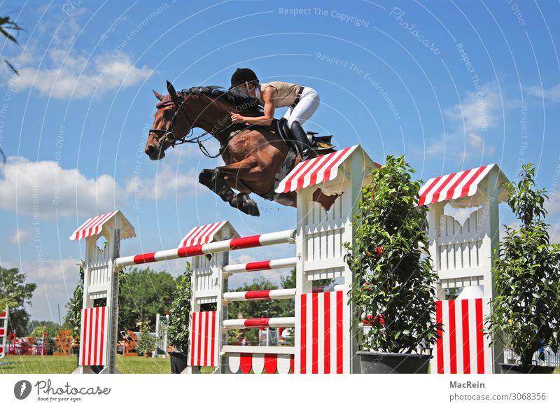 Springreiterin Springreiten Pferdesport Springtunier Sprung springend Außenaufnahme aussen Aussenaufnahme Aussenaufnahmen beim draußen Einhufer Equidae hinten