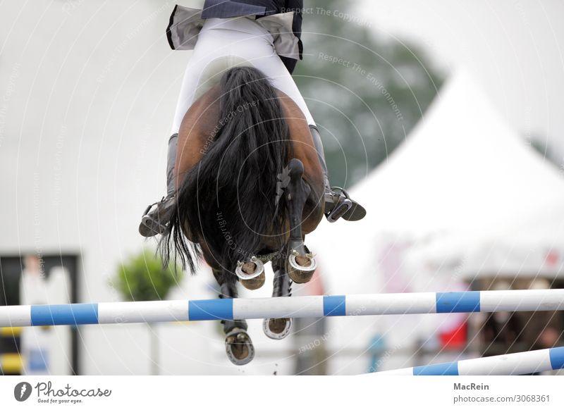 Springreiter Sportveranstaltung Mensch Pferd springen groß oben auf beim BRD Bundesrepublik Düsseldorf deutsch deutsche deutscher Deutschland europäisch Europa