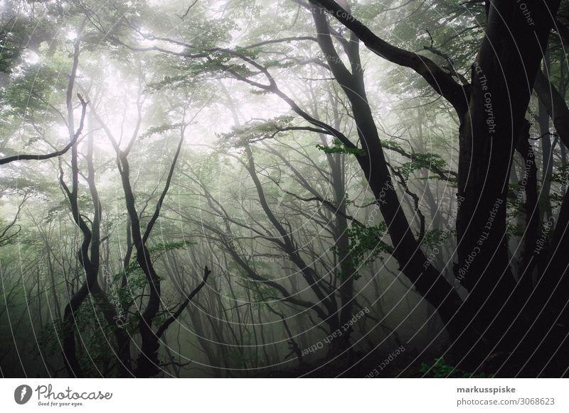 Møns Klint Geo Center Getränk Natur Nebel Wald Urwald gehen geheimnisvoll ruhig Baltic Sea Europa Moen Mön Mon Mons Klint deep forest Dänemark dry fir branch