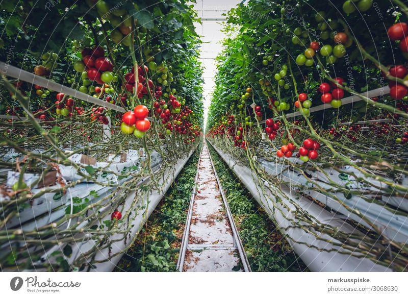 Mega Glasshouse for Tomatoes and Pepper Lebensmittel Gemüse Tomate Tomatenplantage Gewächshaus züchten Ernährung Essen Bioprodukte Vegetarische Ernährung Diät