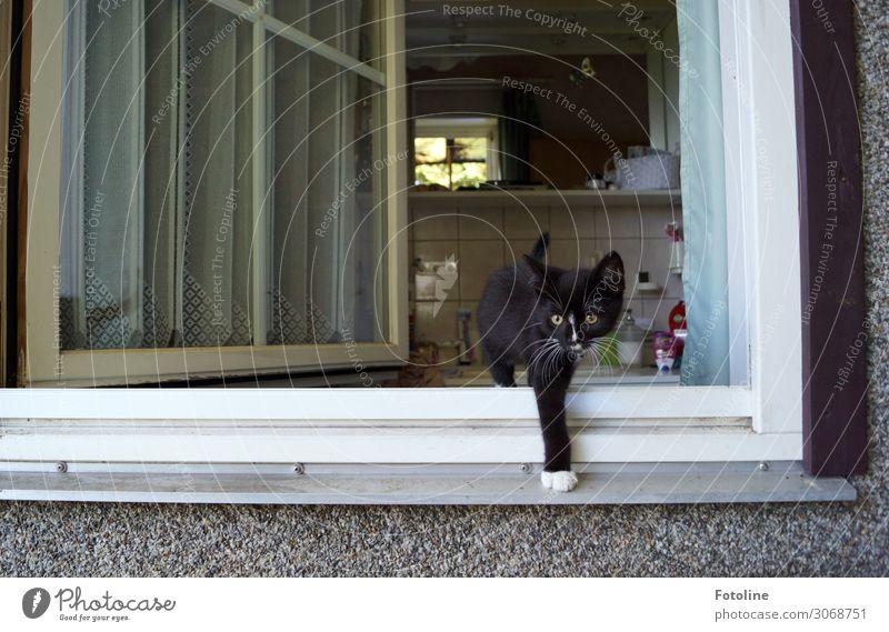 Was ist denn da draußen los? Haus Einfamilienhaus Gebäude Fenster Tier Haustier Katze Fell 1 Tierjunges frech frei Neugier niedlich schwarz weiß Bad offen