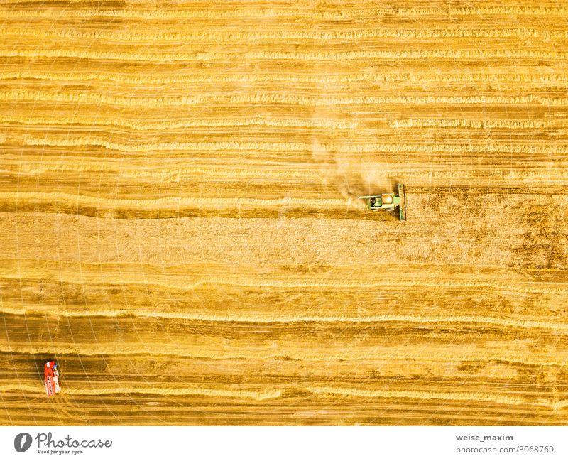 Erntemaschine, die im Feld arbeitet. Brot Sommer Arbeit & Erwerbstätigkeit Industrie Maschine Natur Landschaft Sonnenlicht Herbst Schönes Wetter Pflanze