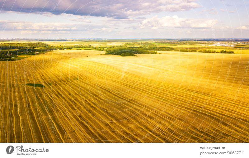 Erntemaschine, die im Feld arbeitet. Landwirtschaft. Brot Sommer Arbeit & Erwerbstätigkeit Industrie Maschine Natur Landschaft Herbst Schönes Wetter Pflanze