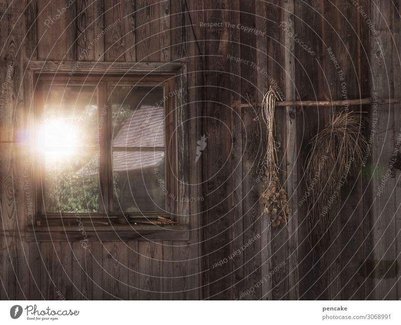 lebensabend Natur alt Sonne Fenster Gebäude nachdenklich Armut Hoffnung Urelemente Landwirtschaft Hütte Samen nachhaltig ländlich trocknen Holzwand